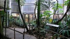 Rain Forest Med
