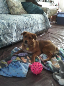 Puppy022814