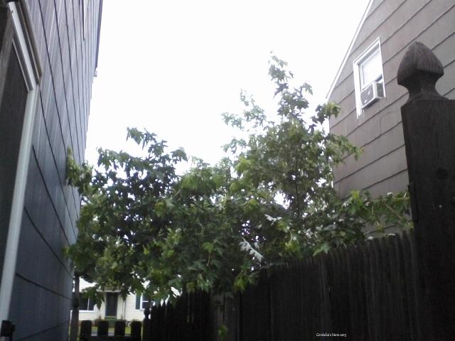 Side Yard 1
