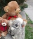 Peacekeeping Bears