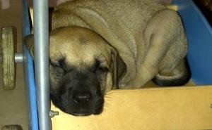 New puppy-1