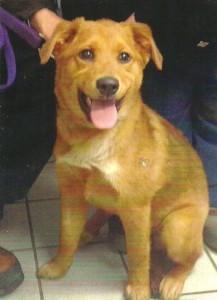 Puppy Cody