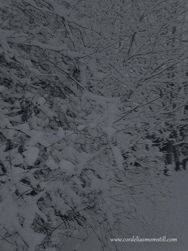 winter-trees-2016-b